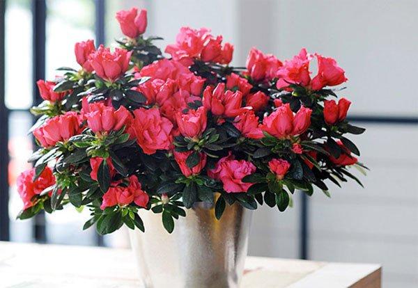 10 loài hoa trưng trong ngày tết mang lại sự giàu sang, phú quý, tài lộc